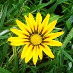 Цветок, фото Еремеева В.
