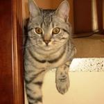 Кот, фото Головчанской Д.