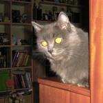 Кот, фото Пановой А.